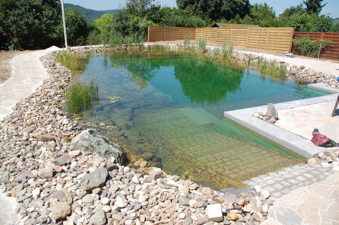 Swimming ponds function construction teich und garten schwimmteiche gartenteiche Natural swimming pool builders